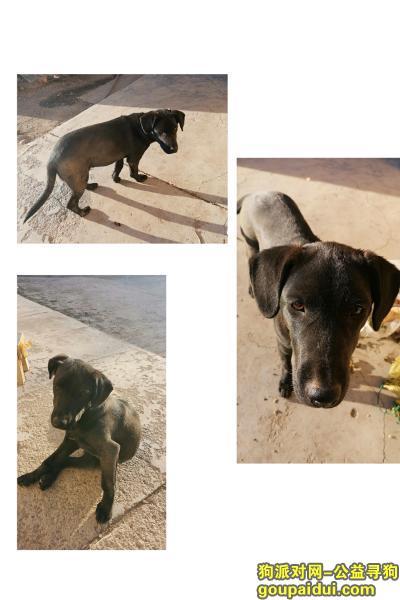 寻狗启示,急寻黑色拉布拉多走丢一整天了,它是一只非常可爱的狗狗,希望狗狗早日回家,不要变成流浪狗。