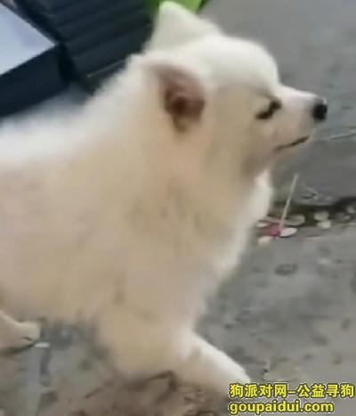 惠州找狗,爱犬走失  望帮忙寻找,它是一只非常可爱的宠物狗狗,希望它早日回家,不要变成流浪狗。