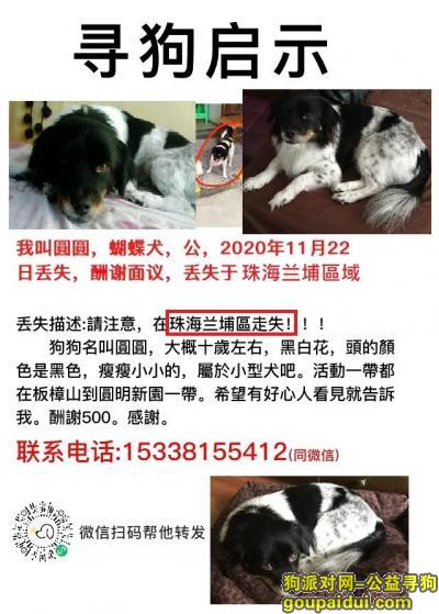珠海寻狗启示,珠海兰埔區走失一隻黑白色的小狗, 名叫阿圓, 請幫忙找, 酬謝500,它是一只非常可爱的宠物狗狗,希望它早日回家,不要变成流浪狗。