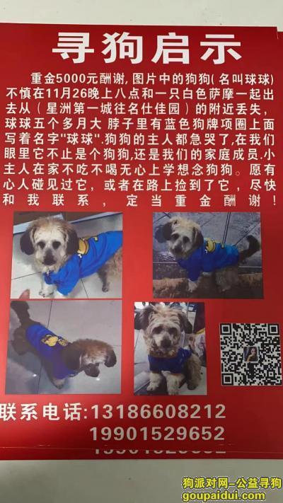 连云港找狗,连云港市灌南县酬谢五千元寻找狗狗,它是一只非常可爱的宠物狗狗,希望它早日回家,不要变成流浪狗。