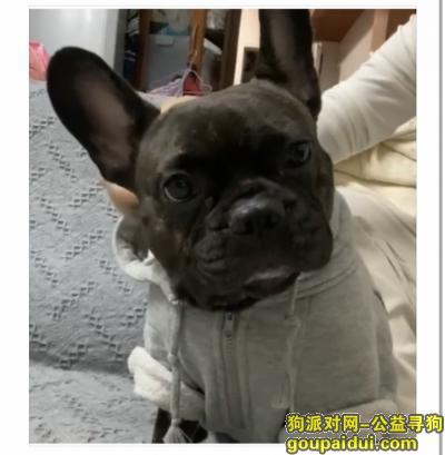 广州丢狗,寻狗启示!求求大家帮我留意一下!它是我的命根子,我很想它!拜托大家了!,它是一只非常可爱的宠物狗狗,希望它早日回家,不要变成流浪狗。