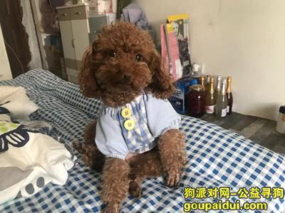 西双版纳寻狗启示,爱犬叫妹妹,于2020年12月6日在景洪市曼弄枫会展小区不慎走丢,它是一只非常可爱的宠物狗狗,希望它早日回家,不要变成流浪狗。