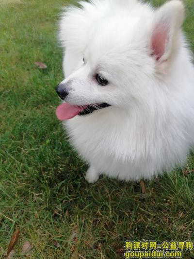 安阳找狗,寻狗:2020年11月28日下午五点在安阳市文峰区兴安·金都瑞园附近走失,它是一只非常可爱的宠物狗狗,希望它早日回家,不要变成流浪狗。