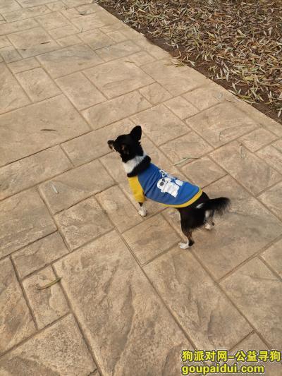 邯郸找狗,狗狗跑丢了五天了没有任何消息,它是一只非常可爱的宠物狗狗,希望它早日回家,不要变成流浪狗。