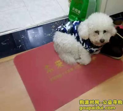 阜阳找狗,寻找狗狗 希望城市充满爱 不管对人 还是狗狗,它是一只非常可爱的宠物狗狗,希望它早日回家,不要变成流浪狗。