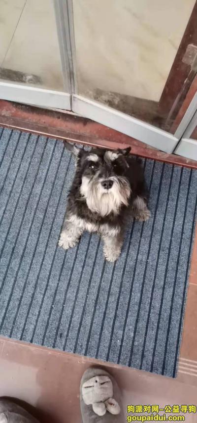 安阳寻狗网,急找狗重金悬赏狗狗是在安阳301附近丢失的不知道怎么不回来了急找,它是一只非常可爱的宠物狗狗,希望它早日回家,不要变成流浪狗。