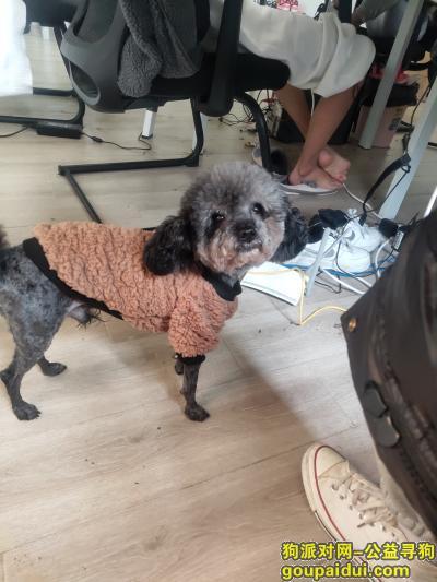 杭州捡到狗,联系电话 15381120108,它是一只非常可爱的宠物狗狗,希望它早日回家,不要变成流浪狗。