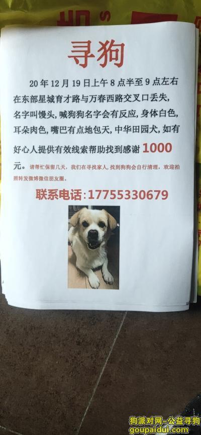 芜湖找狗,芜湖东部星城育才路万春西路寻找田园犬,它是一只非常可爱的宠物狗狗,希望它早日回家,不要变成流浪狗。