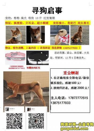常德找狗,重金寻找10个月小母赤色柴犬,它是一只非常可爱的宠物狗狗,希望它早日回家,不要变成流浪狗。