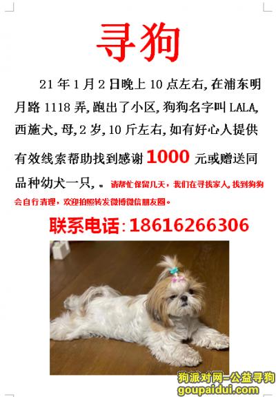 上海寻狗网,上海浦东明月路1118弄寻找西施犬,它是一只非常可爱的宠物狗狗,希望它早日回家,不要变成流浪狗。