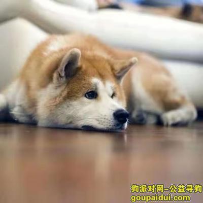 运城寻狗启示,山西省稷山县紧急寻狗,它是一只非常可爱的宠物狗狗,希望它早日回家,不要变成流浪狗。