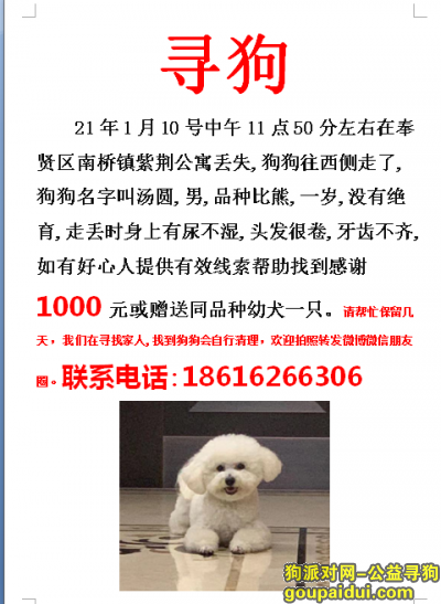 上海寻狗启示,上海奉贤区南桥镇紫荆公寓寻找比熊,它是一只非常可爱的宠物狗狗,希望它早日回家,不要变成流浪狗。