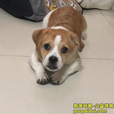 顺德寻狗启示,狗已找到,谢谢。。。,它是一只非常可爱的宠物狗狗,希望它早日回家,不要变成流浪狗。