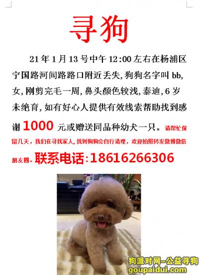 上海找狗,上海杨浦区宁国路河间路寻找泰迪,它是一只非常可爱的宠物狗狗,希望它早日回家,不要变成流浪狗。