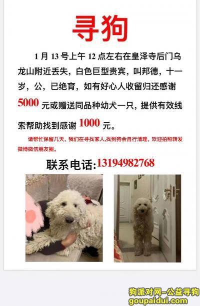 广元寻狗网,广元市 皇泽寺乌龙山酬谢五千元寻找巨贵,它是一只非常可爱的宠物狗狗,希望它早日回家,不要变成流浪狗。