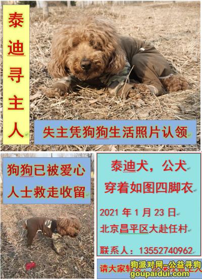 捡到狗,泰迪寻主人(北京昌平区小汤山镇大赴任村),它是一只非常可爱的宠物狗狗,希望它早日回家,不要变成流浪狗。