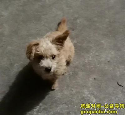 衢州寻狗启示,麻烦好心人看到帮我多多转发并能通知我谢谢 电话号码18857031810,它是一只非常可爱的宠物狗狗,希望它早日回家,不要变成流浪狗。