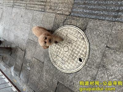 捡到狗,贵阳新路口海鲜市场门口捡到泰迪,它是一只非常可爱的宠物狗狗,希望它早日回家,不要变成流浪狗。