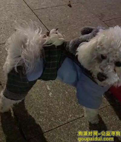 泰州寻狗,球球,回家吧,姐姐想你了,它是一只非常可爱的宠物狗狗,希望它早日回家,不要变成流浪狗。