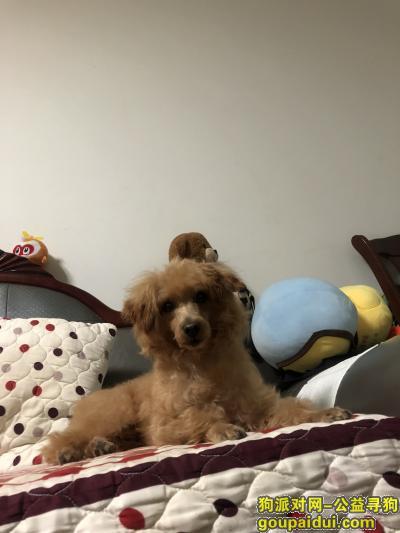 南京找狗,寻找爱犬泰迪,点点看到的请联系,,它是一只非常可爱的宠物狗狗,希望它早日回家,不要变成流浪狗。