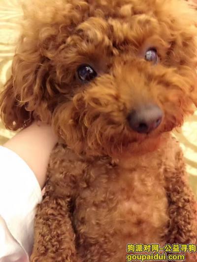 淮南寻狗启示,希望好心人帮忙看看找一下,它是一只非常可爱的宠物狗狗,希望它早日回家,不要变成流浪狗。