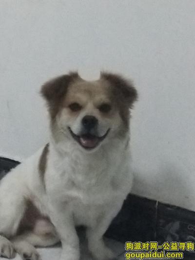 内江寻狗启示,重金悬赏,黄白相间17斤的小狗,叫包子,它是一只非常可爱的宠物狗狗,希望它早日回家,不要变成流浪狗。