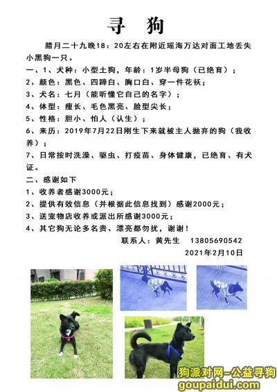 合肥丢狗,合肥瑶海万达酬谢3000元寻找小黑狗,它是一只非常可爱的宠物狗狗,希望它早日回家,不要变成流浪狗。
