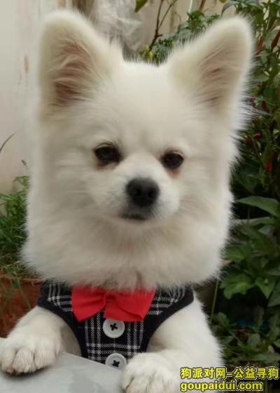 大理寻狗启示,寻狗启示,中型 博美 犬,3岁,名字为可仔,丢失地点为 滨河公园(新桥北),它是一只非常可爱的宠物狗狗,希望它早日回家,不要变成流浪狗。
