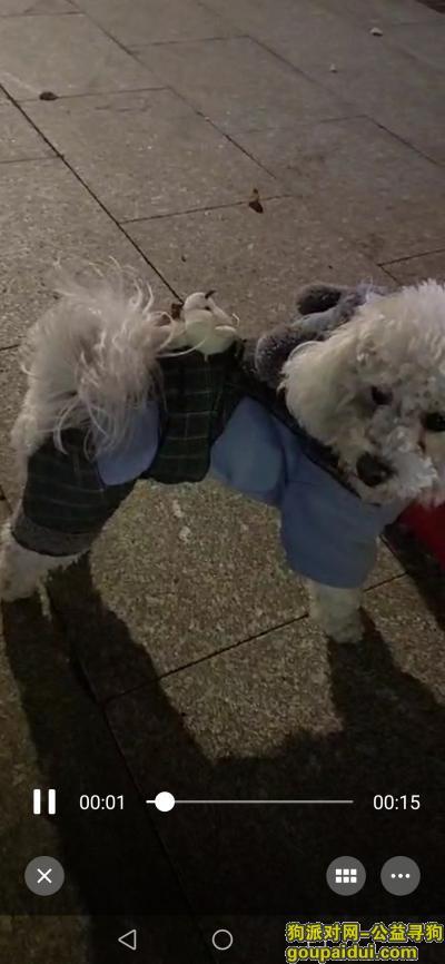 泰州丢狗,球球,回家吧,真的好想你,它是一只非常可爱的宠物狗狗,希望它早日回家,不要变成流浪狗。