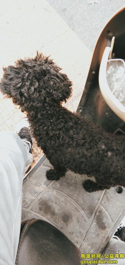 捡到狗,七星区捡到一条泰迪狗,是谁家的崽丢了,它是一只非常可爱的宠物狗狗,希望它早日回家,不要变成流浪狗。