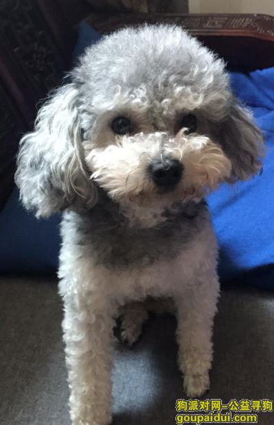 无锡寻狗启示,真的求求了  养了很久有感情了,它是一只非常可爱的宠物狗狗,希望它早日回家,不要变成流浪狗。