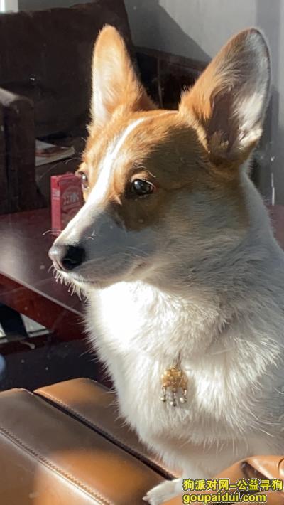 泰州寻狗,求求捡到狗的给送回来ba,它是一只非常可爱的宠物狗狗,希望它早日回家,不要变成流浪狗。