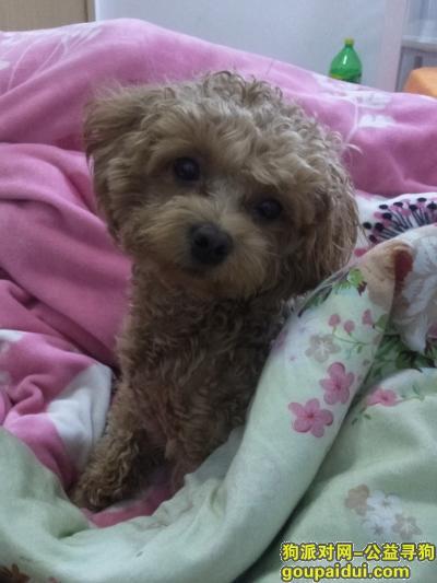 南京寻狗启示,雨花台晓村和苑B期走失,一岁多,母狗,未绝育,胆小。,它是一只非常可爱的宠物狗狗,希望它早日回家,不要变成流浪狗。