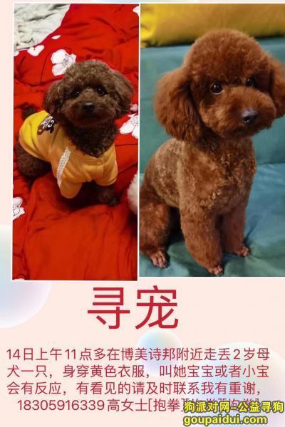 福州丢狗,14号中午11点多咖色泰迪母狗狗身穿黄色衣服,它是一只非常可爱的宠物狗狗,希望它早日回家,不要变成流浪狗。