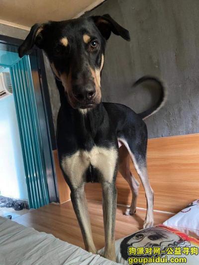 南京找狗,急寻爱犬 有偿回报!!!!,它是一只非常可爱的宠物狗狗,希望它早日回家,不要变成流浪狗。