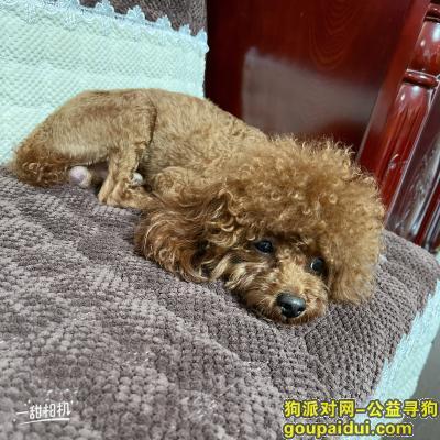 福州寻狗,寻找爱犬一枚,名字叫米修,它是一只非常可爱的宠物狗狗,希望它早日回家,不要变成流浪狗。