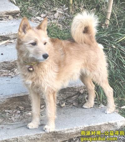 捡到狗,3月18号上午狗狗从家跑出,3月19号中午,友邻拍下了在紫金路跟着别人向西走,它是一只非常可爱的宠物狗狗,希望它早日回家,不要变成流浪狗。