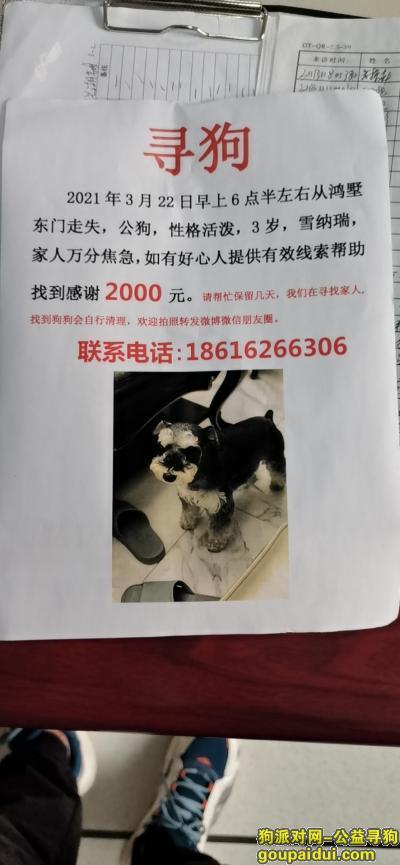 无锡找狗,无锡鸿墅东门酬谢2000元寻找雪纳瑞,它是一只非常可爱的宠物狗狗,希望它早日回家,不要变成流浪狗。