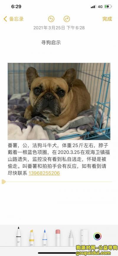 宁波找狗,在宁波市慈溪市观海卫镇被偷走,它是一只非常可爱的宠物狗狗,希望它早日回家,不要变成流浪狗。