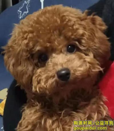 达州寻狗启示,寻狗启示。四川省达州市达川区南外镇寻狗,它是一只非常可爱的宠物狗狗,希望它早日回家,不要变成流浪狗。