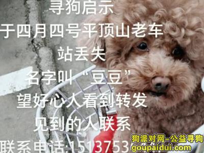 平顶山找狗,平顶山寻狗:寻狗 名字是豆豆 泰迪,它是一只非常可爱的宠物狗狗,希望它早日回家,不要变成流浪狗。