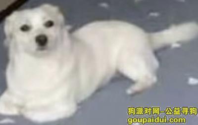 淄博寻狗启示,寻狗启示在东城华府晚上八点左右丢失,求助,它是一只非常可爱的宠物狗狗,希望它早日回家,不要变成流浪狗。