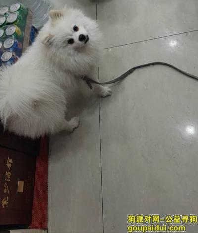 成都寻狗启示,高回报寻找爱犬,家庭一员,它是一只非常可爱的宠物狗狗,希望它早日回家,不要变成流浪狗。