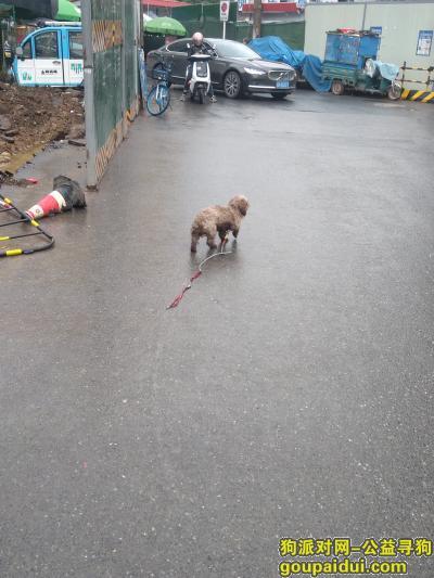 芜湖寻狗网,镜湖区工农路,发现狗狗一只,本人不懂品种,它是一只非常可爱的宠物狗狗,希望它早日回家,不要变成流浪狗。