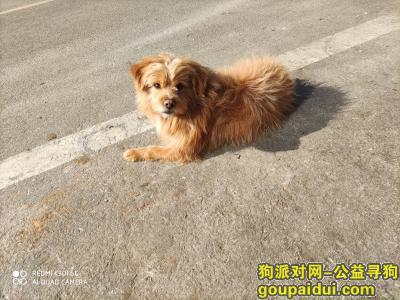 长沙找狗,2021年4月30日在南湖机电市场走失一只串串狗狗,名字叫锤锤,有注射芯片,它是一只非常可爱的宠物狗狗,希望它早日回家,不要变成流浪狗。