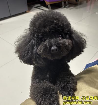 南昌寻狗网,南昌西湖区重金急寻狗,它是一只非常可爱的宠物狗狗,希望它早日回家,不要变成流浪狗。