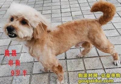 潍坊找狗,寻找丢失的小串狗(牙不齐大脚),它是一只非常可爱的宠物狗狗,希望它早日回家,不要变成流浪狗。