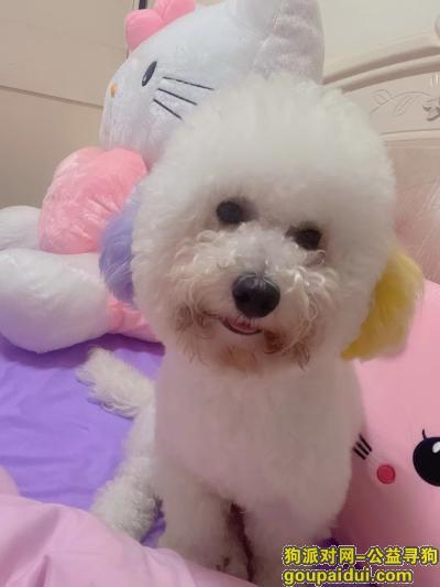 莆田找狗,有看到联系我必给酬谢15659532723,它是一只非常可爱的宠物狗狗,希望它早日回家,不要变成流浪狗。