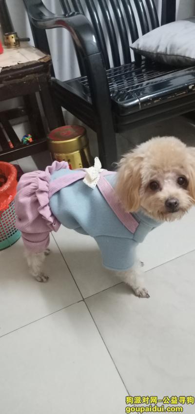 广州丢狗,寻找爱犬,爱犬豆豆于2021年5月19日晚在广州市白云区富力半岛公交车站走失,它是一只非常可爱的宠物狗狗,希望它早日回家,不要变成流浪狗。