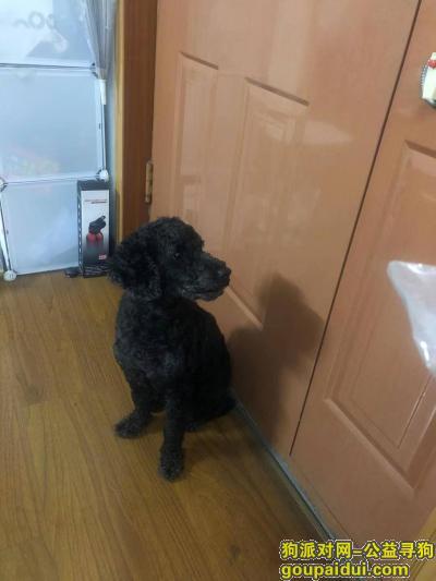 武汉找狗,寻找爱犬乖乖,一家人都在等你回来,它是一只非常可爱的宠物狗狗,希望它早日回家,不要变成流浪狗。